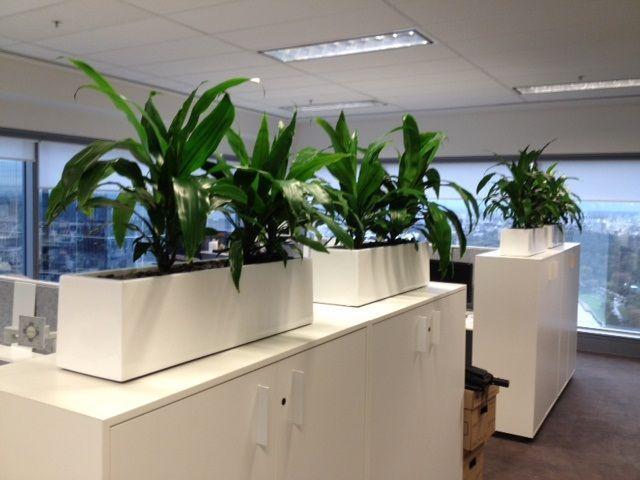 Pots planters choice indoor pots outdoor planters for Cubicle planter box