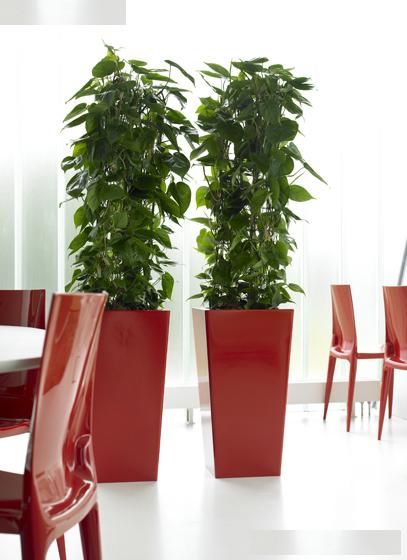 Indoor Plant Hire Melbourne