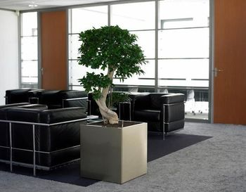 Indoor-plant-hire-A3.jpg