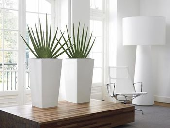 indoor-plant-hire-A12.jpg